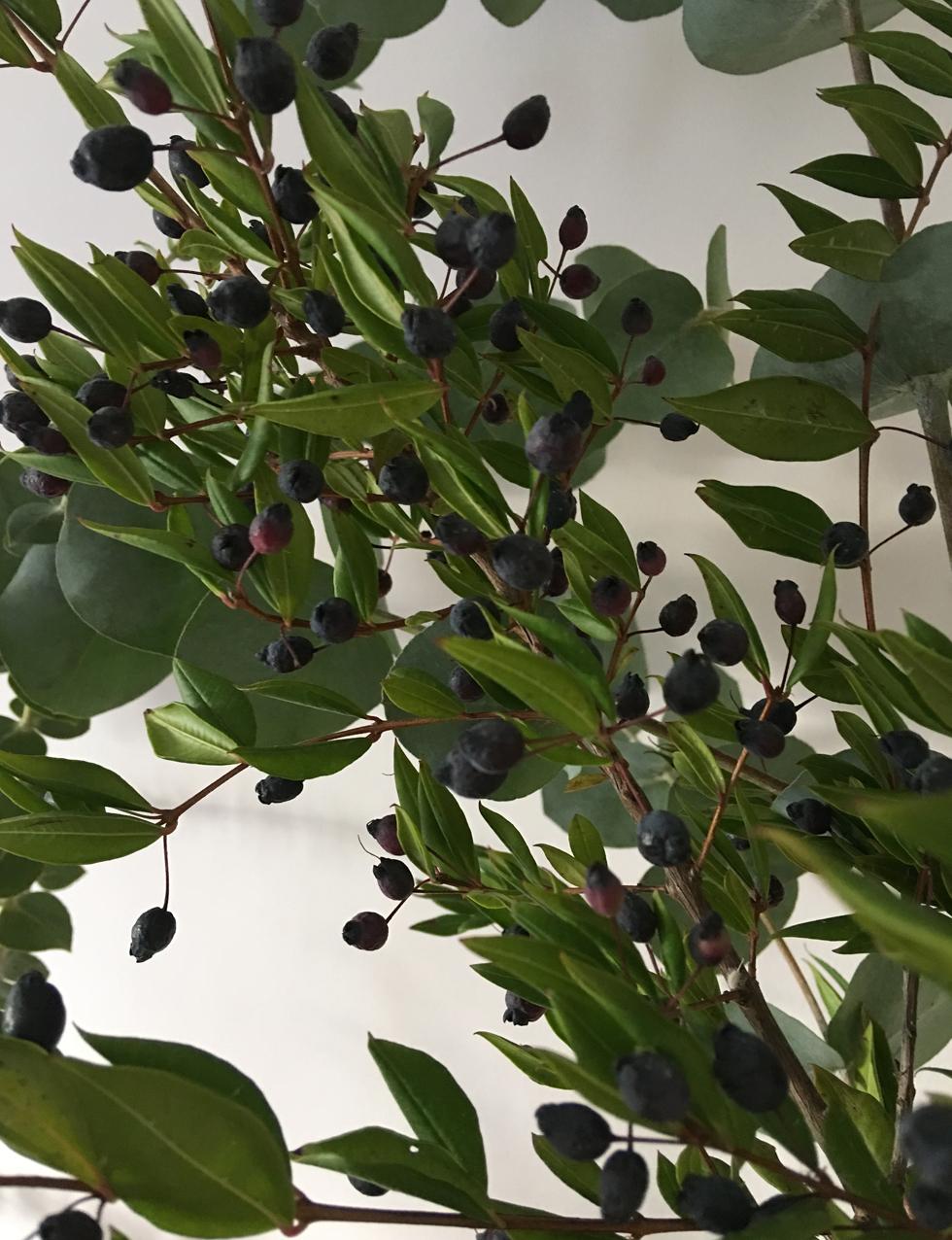 berried-myrtle.jpg