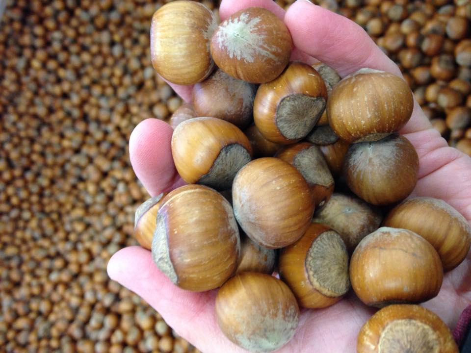 handful of nuts.jpg