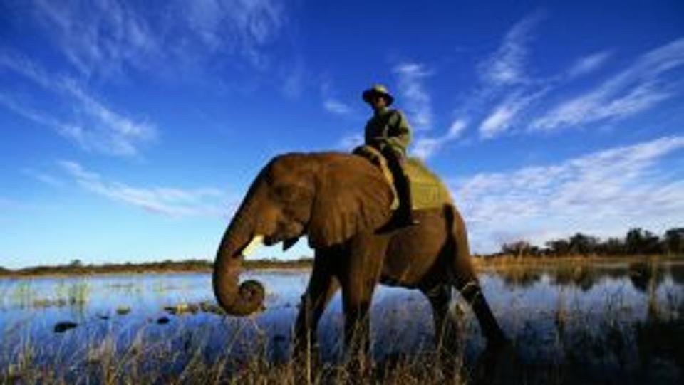 elephant_rider_grass_sky_29250_1280x720-300x169.jpg