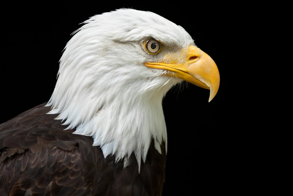 Symbol Of America Pray Gods Will