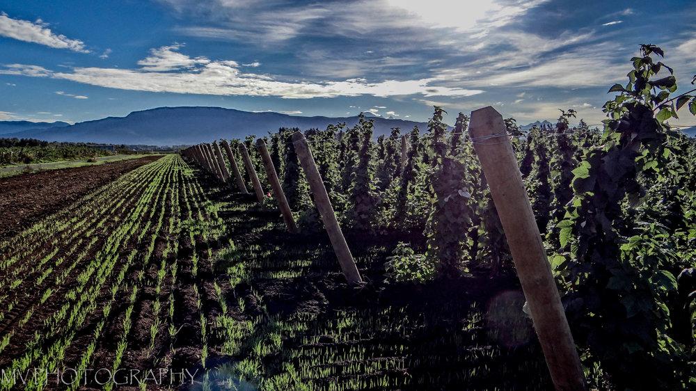 Samson Estates Winery - Producing Quality Northwest Wine Since 2001