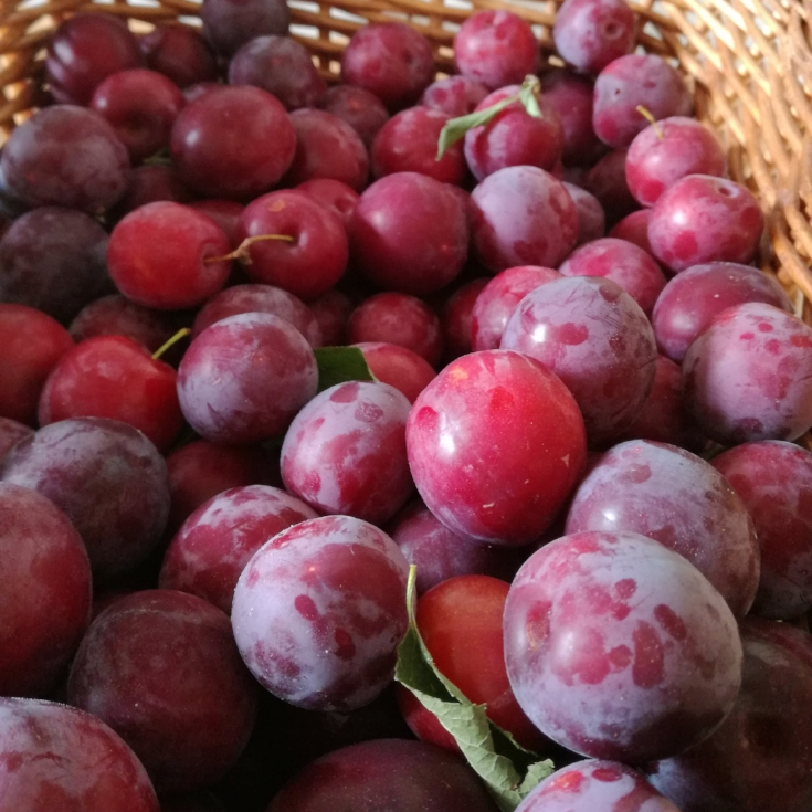 Plum harvest- whole fresh (or cooked) fruit is the best kind of sweet food for your teeth, but even too much fruit can be hard on your teeth