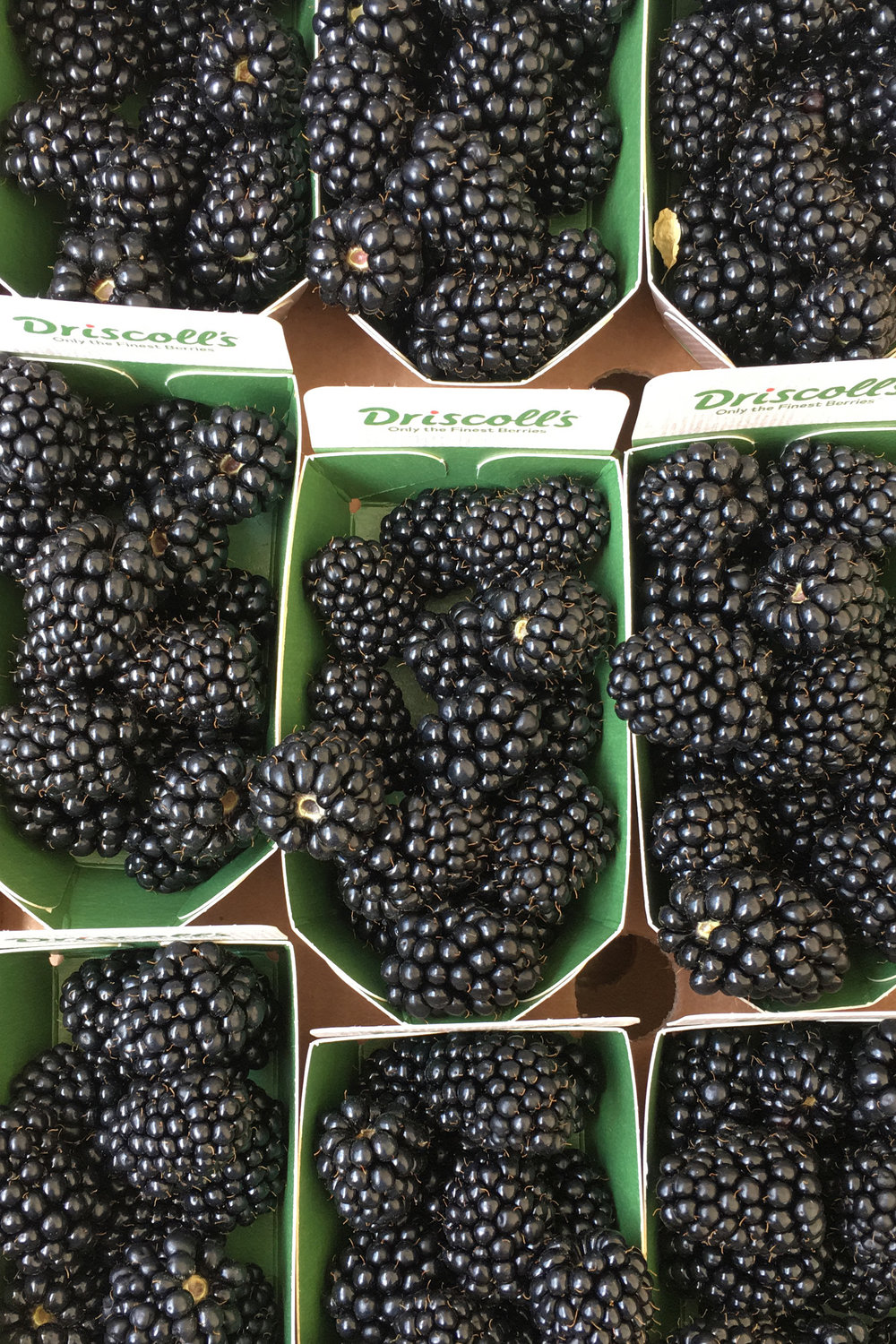 blackberries from torvehalle