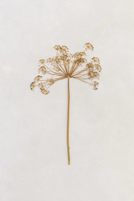 botanical stilllife by marieke verdenius