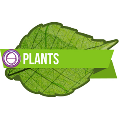 thetahealing-plant-400.jpg