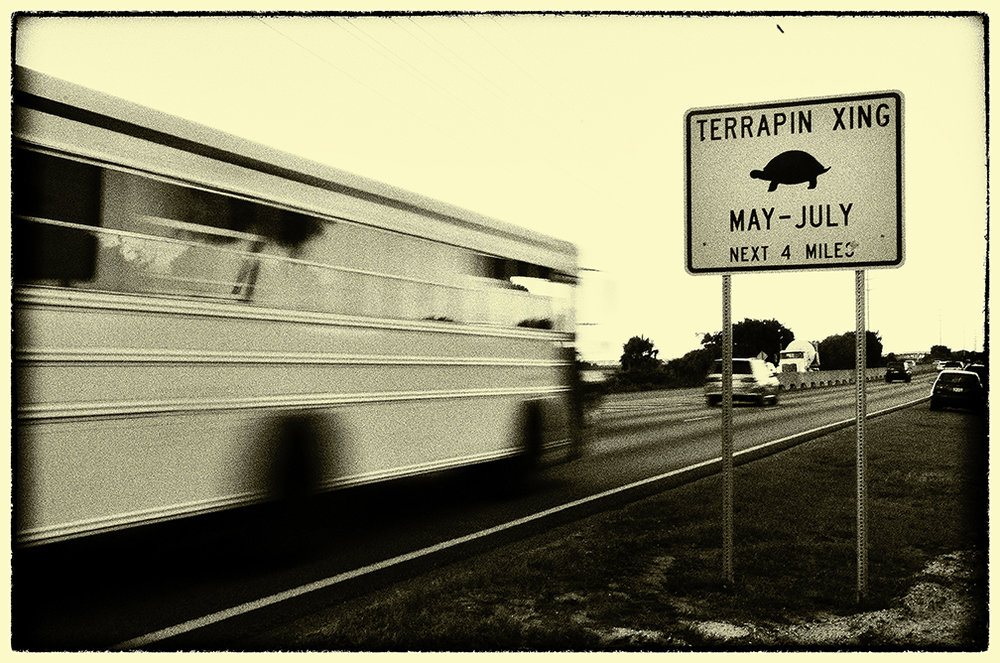 Terrapin Crossing, St. Simons  2016.jpg