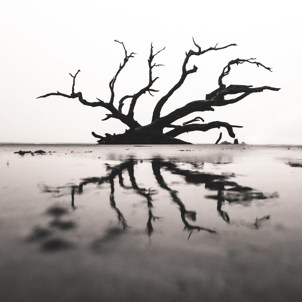 driftwood bw square reflection social media size.JPG