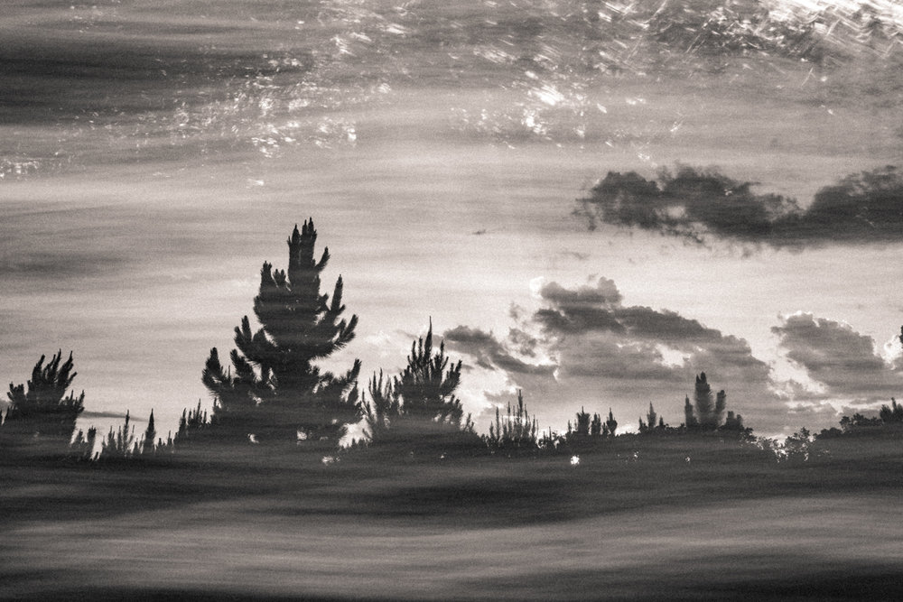 swish trees.jpg