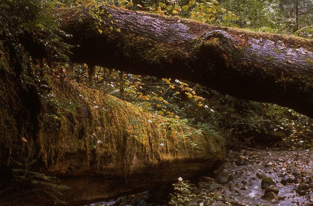ss-oth-fallen_redwoods.jpg