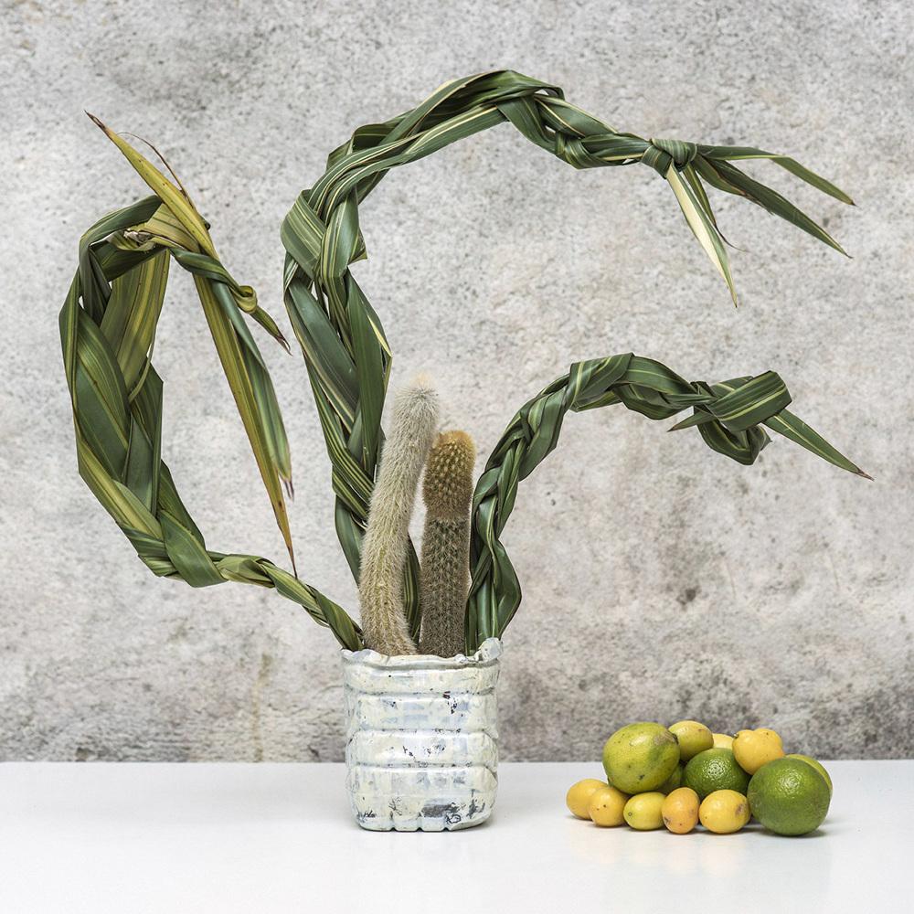 Photographie de Rafael D'Alo, série  Tropical arrangement for a dead king, 40 x 42 cm