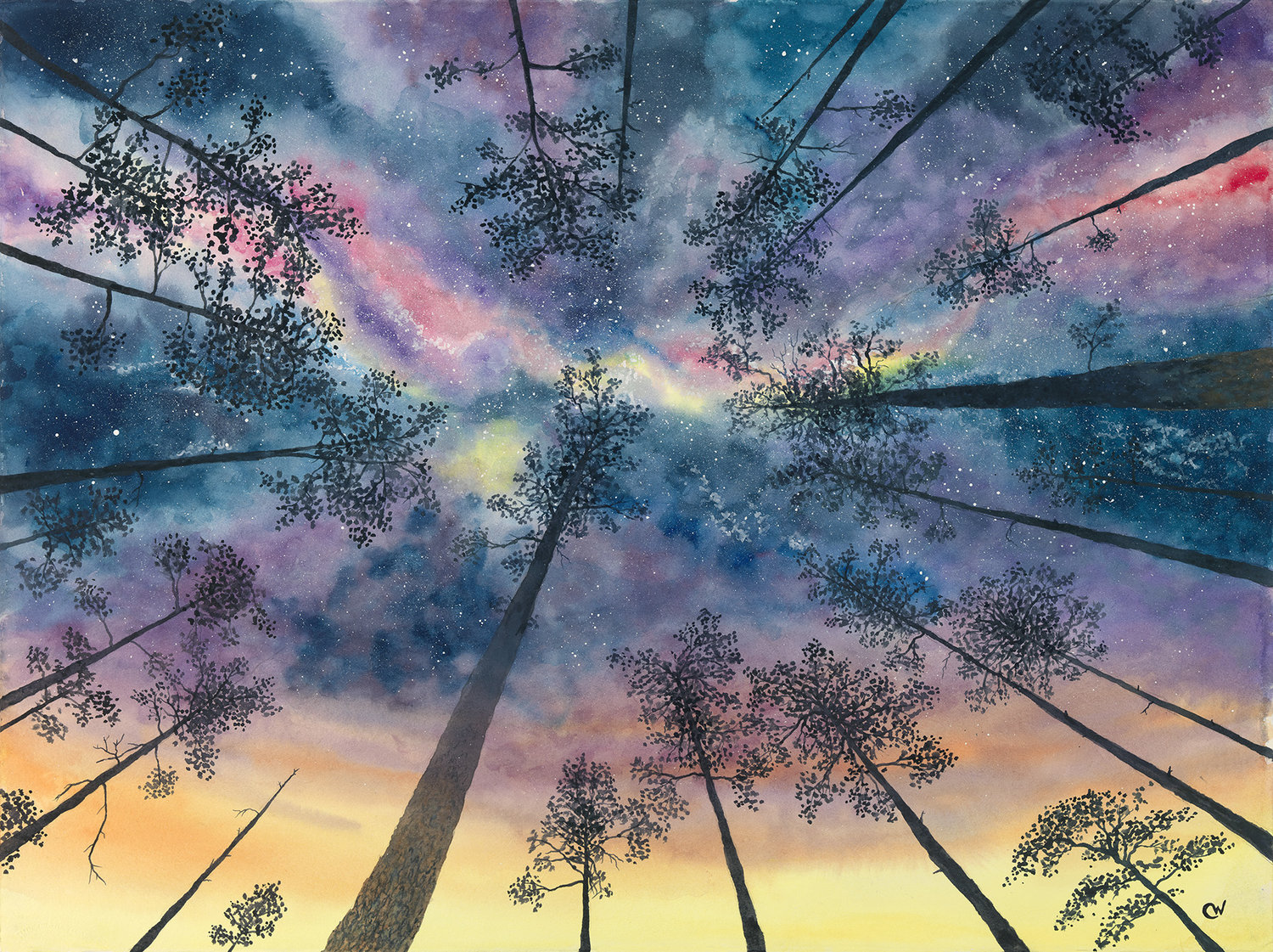 Night Sky in the Pines