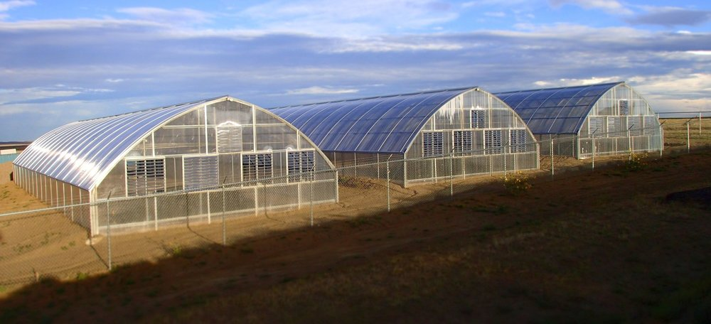 At 30' x 96', the 2880-sq. ft Ranger Series 2000 Greenhouse model has demonstrated in a short time to the team at Colorado Buffalo Ranch Facility I that they are ideal for producing a steady, clean crop of Cannabis plants. Pictured here the first three Ranger Greenhouses can be seen from their air-intake end walls that face into the prevailing winds. The louvers, fans, and heater are all controlled automatically by a Link4 environmental controller unit, enabling the team to achieve precise control of humidity and temperature.
