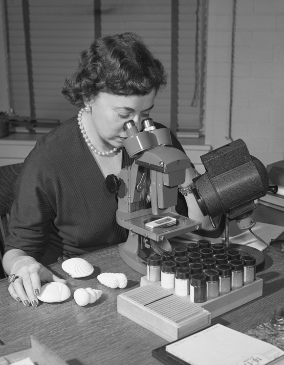 The curator of micropaleontology, courtesy of the American Museum of Natural History.