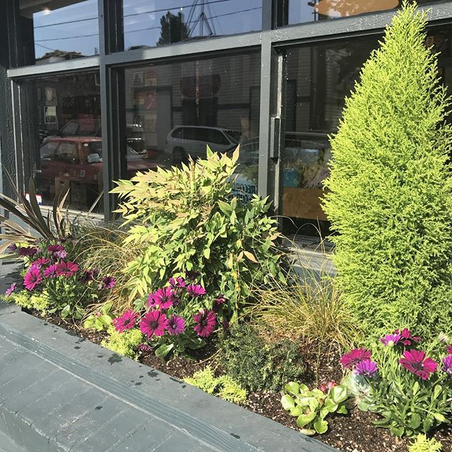 👒🌿Sprucing up the place for summer. Thanks to the homie Zach Alexander for helping us out every change of seasons! We got #begonias #africandasies #sedum going on. #plantsofinstagram #daybreakrecords #springcleaning