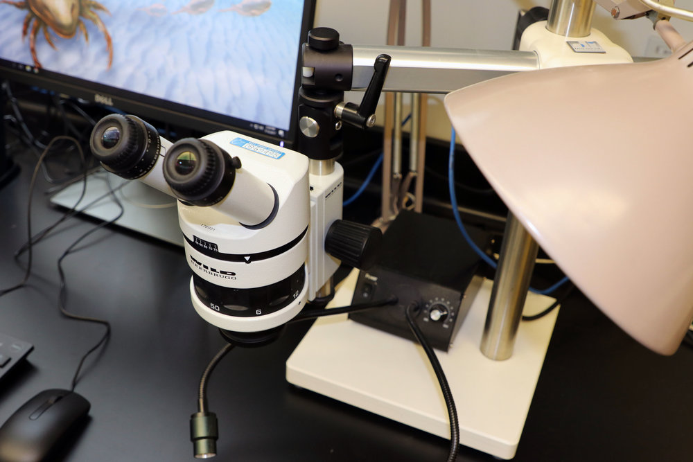 Leica Stereo Microscope on fixed base