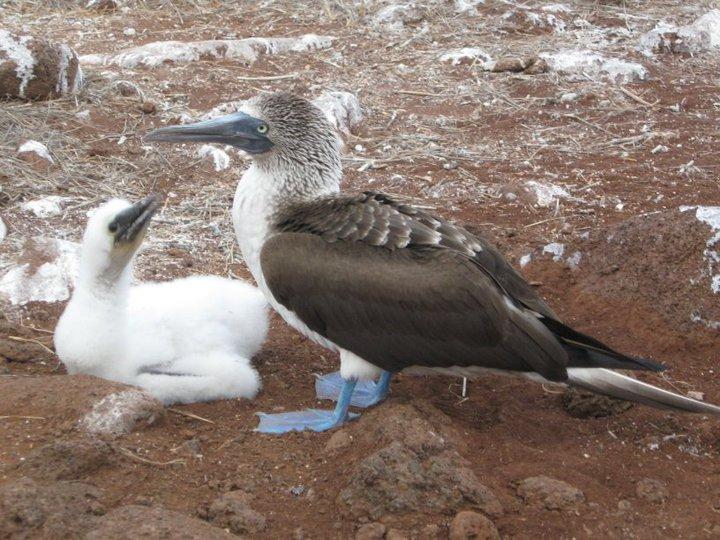 24 Galapagos Ecuador.jpg