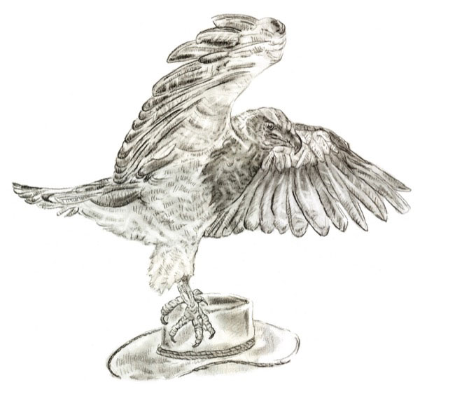 GreyEagle_drawing.jpg