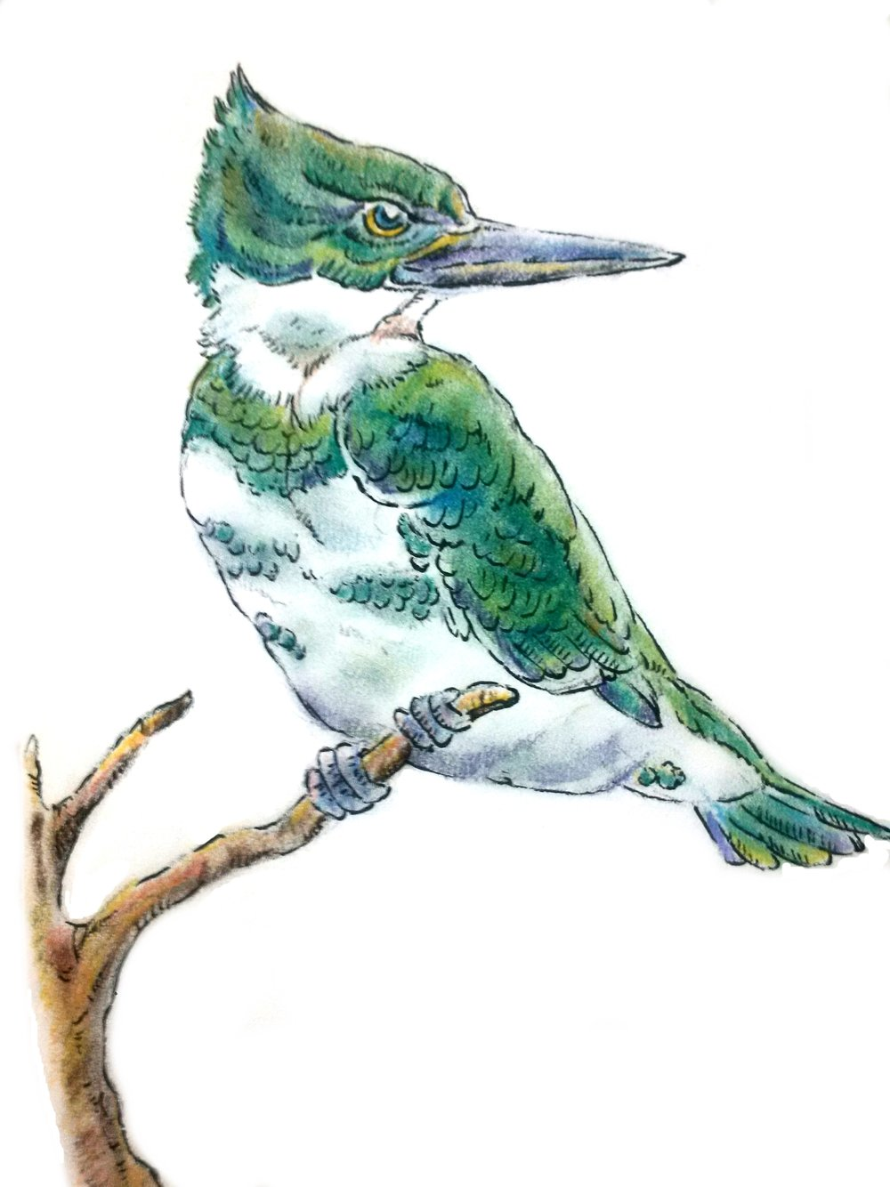 March - Green Kingfisher.jpg