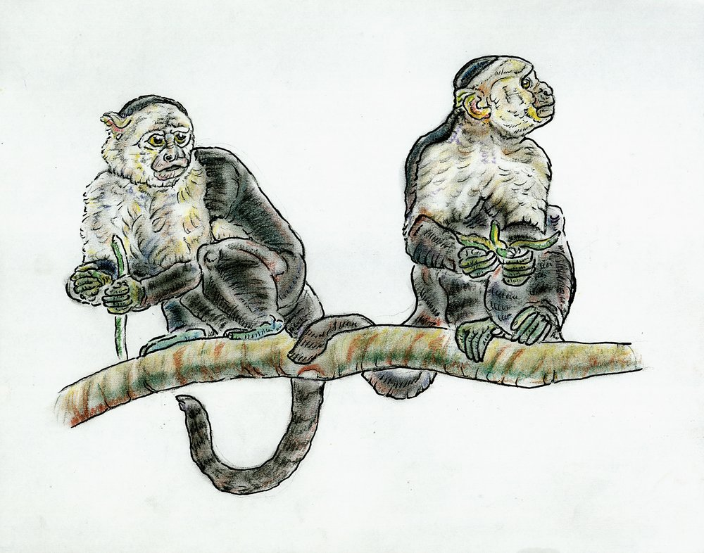 June Capuchins.jpg