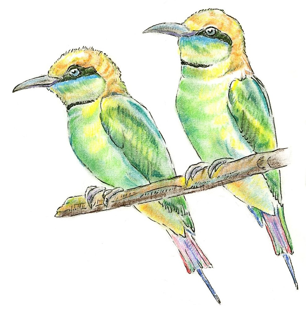 GreenBeeEaters.jpg