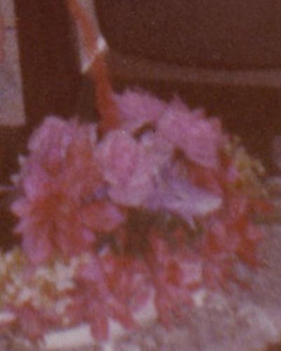 flor13.jpg