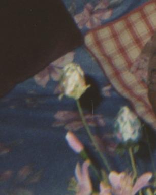 flor10.jpg