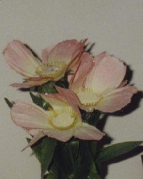 flor11.jpg