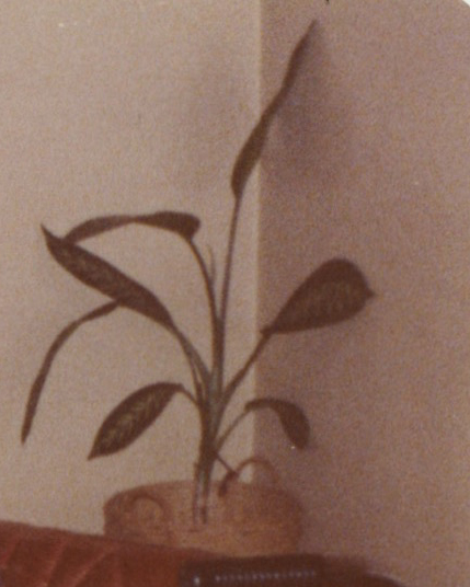 planta2.jpg