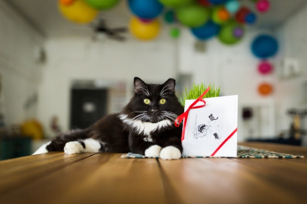 Vinny models The Dancing Cat's gift certificates.