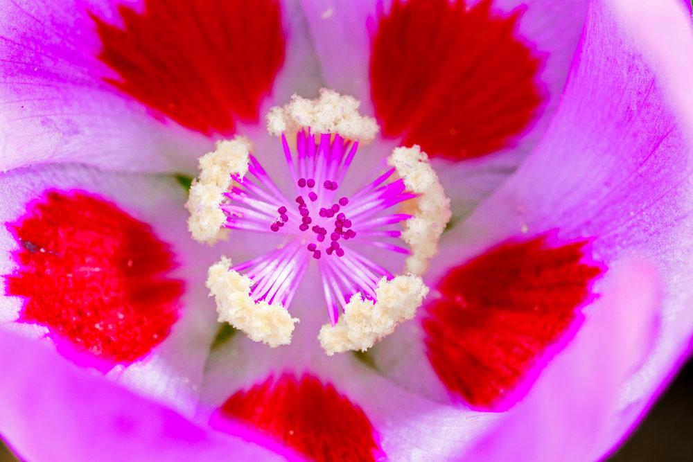 031716_flowers_tsh05.jpg