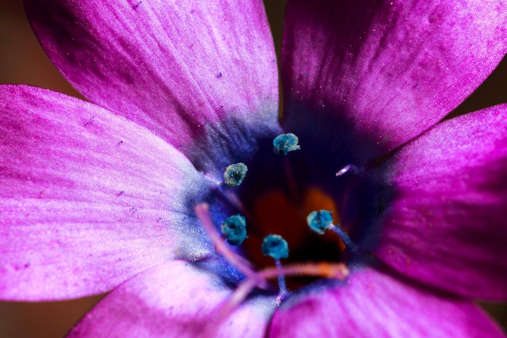 031716_flowers_tsh02.jpg