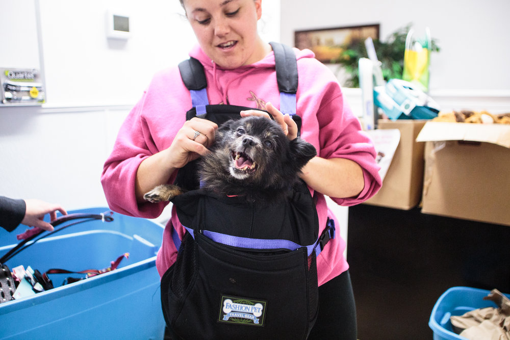 Staffer Brianne Stahl puts a new collar on Chloe, who requires 24-hour care due to a digestion issue. Chloe is also blind, but loves to be carried around.