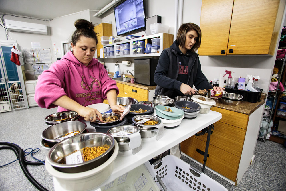 Staffers Brianne Stahl (left) and Sue Bee (right) prepare food for twenty one dogs currently at the Senior Dog Sanctuary. Feedings start promptly at 5:15 p.m., according to their medication schedule, and they go through roughly 25 cans a day of food.