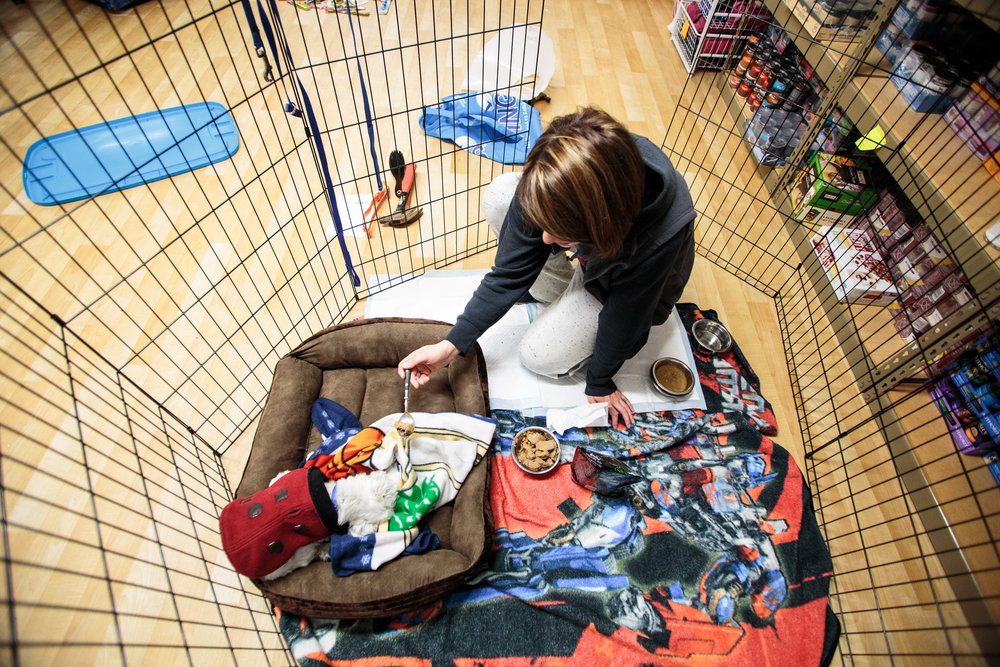 Staffer Sue Bee sits down with 13 year-old Frankie to feed him in his quarantine cage due to a skin condition. After losing most of his teeth, Frankie needs extra help eating