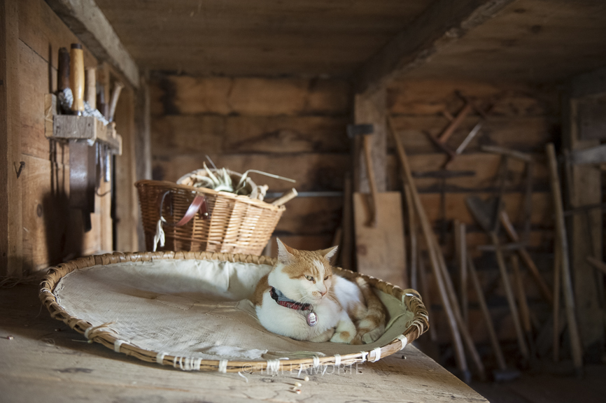 Ginger sits in a winnowing basket in the barn on Sept. 3.