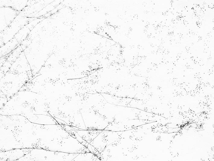white7.jpg