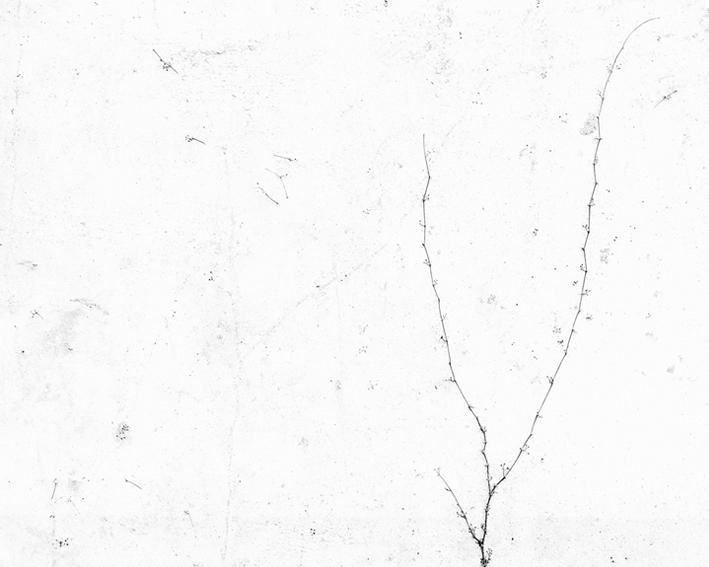 white10.jpg