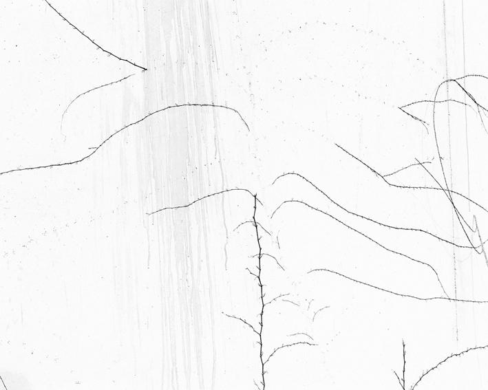 white11.jpg