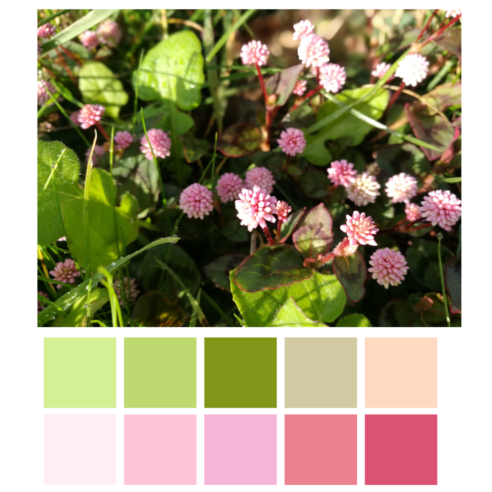 Hedgerow Flowers-01.png