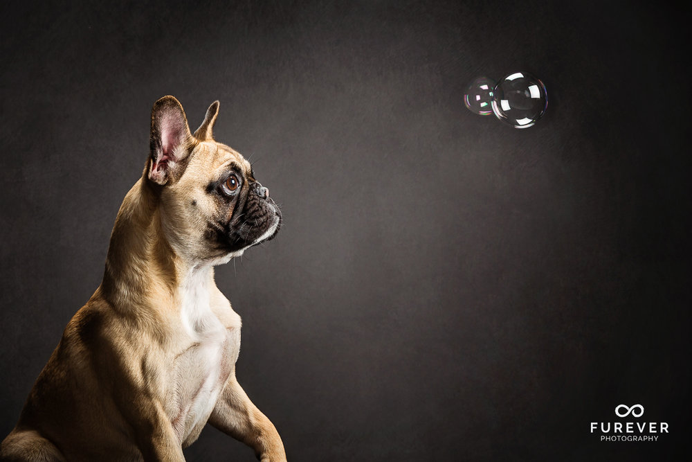 Dog_Portrait_Photographer_22.jpg