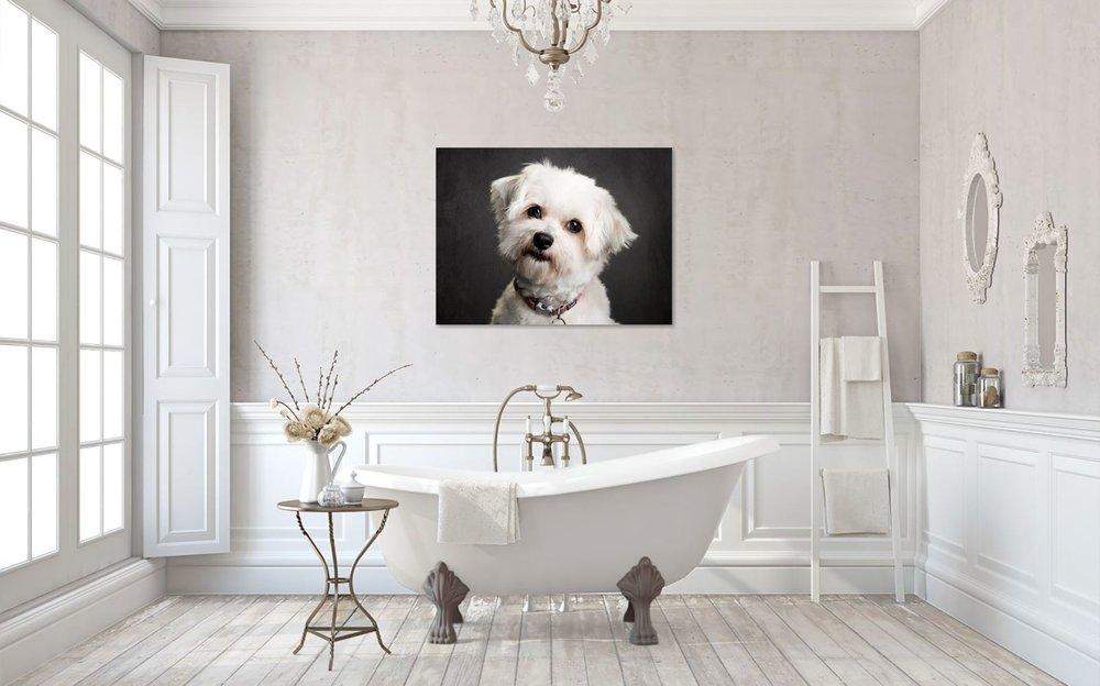 Wall_Art_Dog_Portrait_Ana.jpg