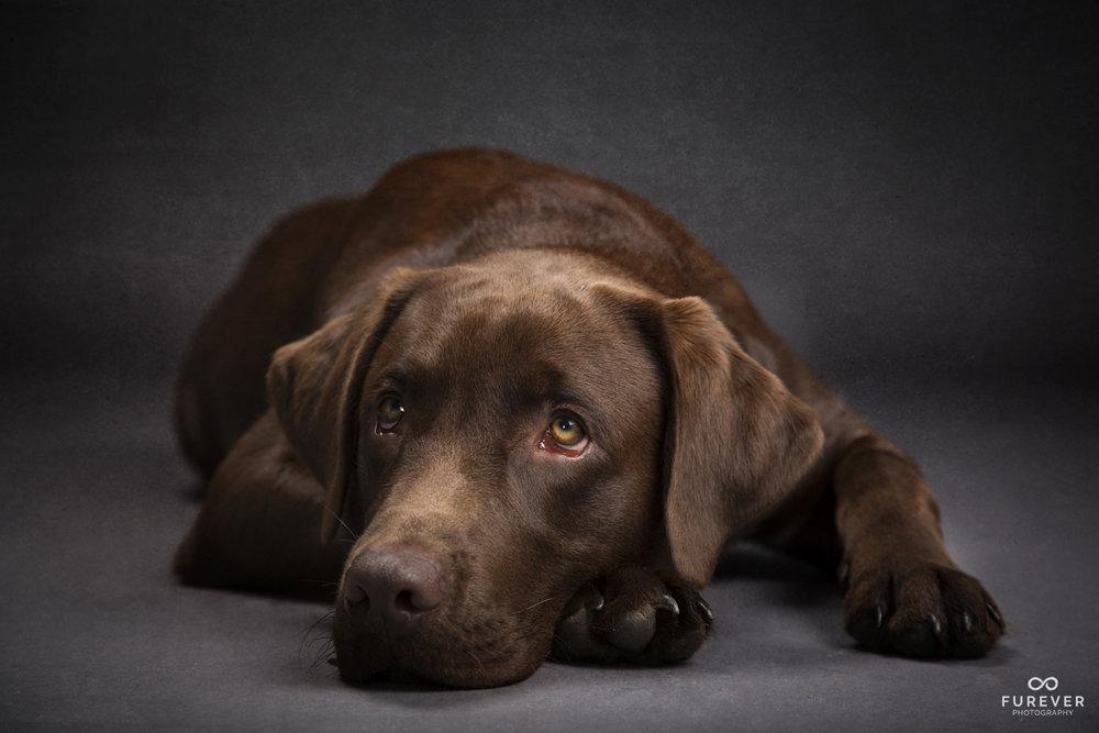 Dog_Portrait_Photographer_47_GR 27.jpg
