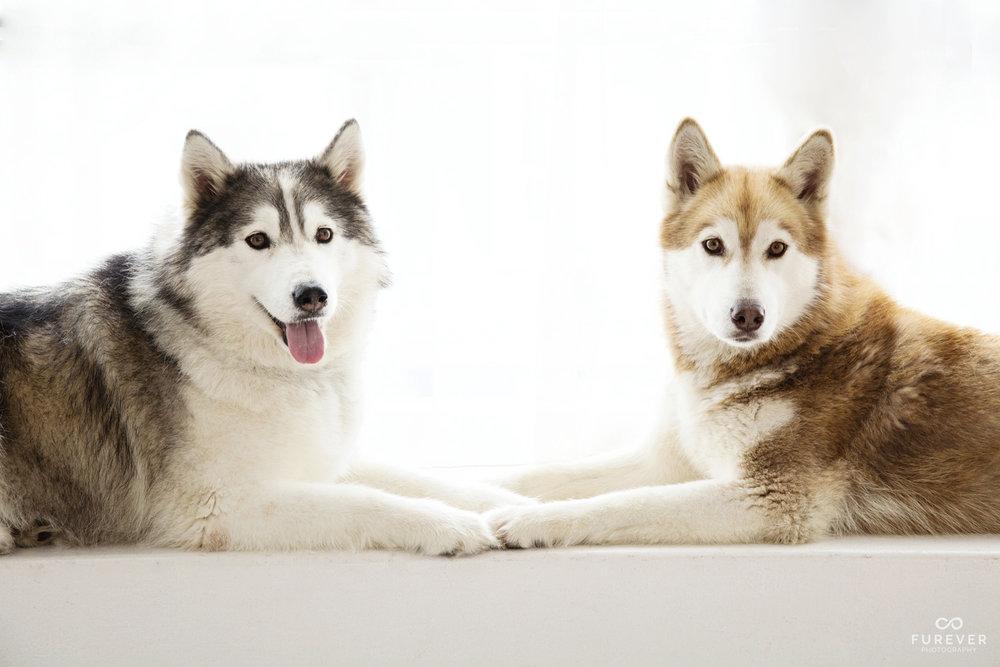 Dog_Portrait_Photographer_51_PF01.jpg