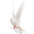White Dove small.png