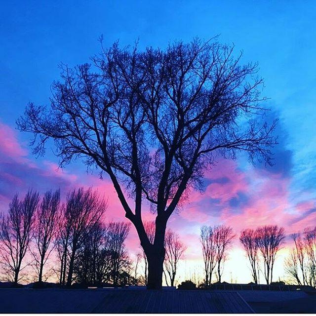 Sunrise Regram @Scam.inc