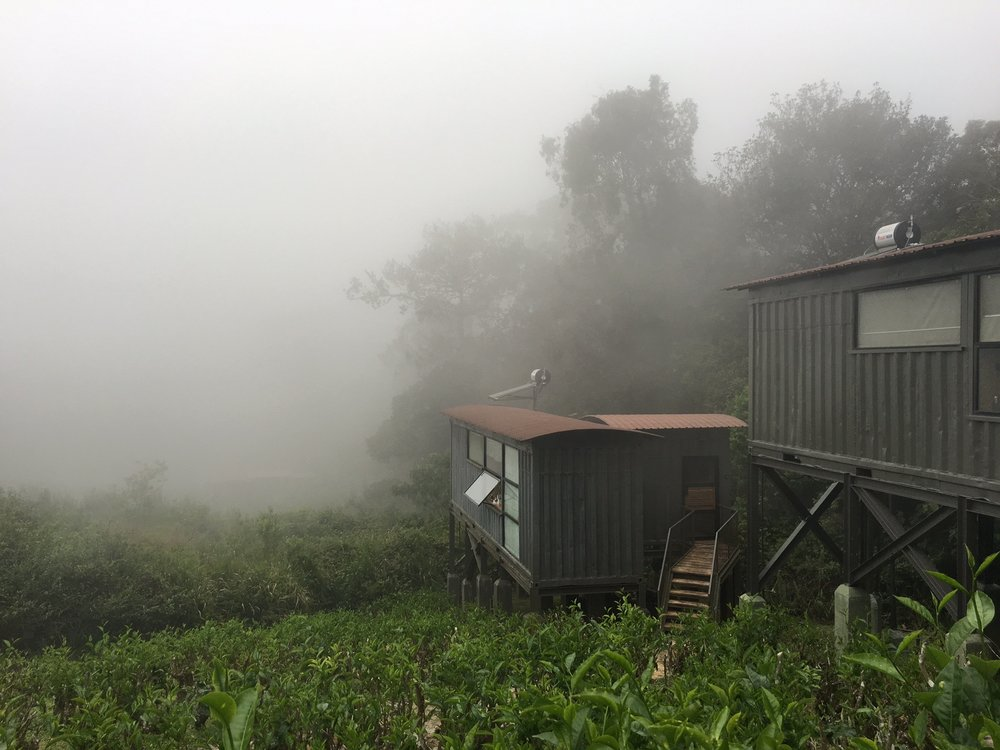 Misty days at Sinharaja.
