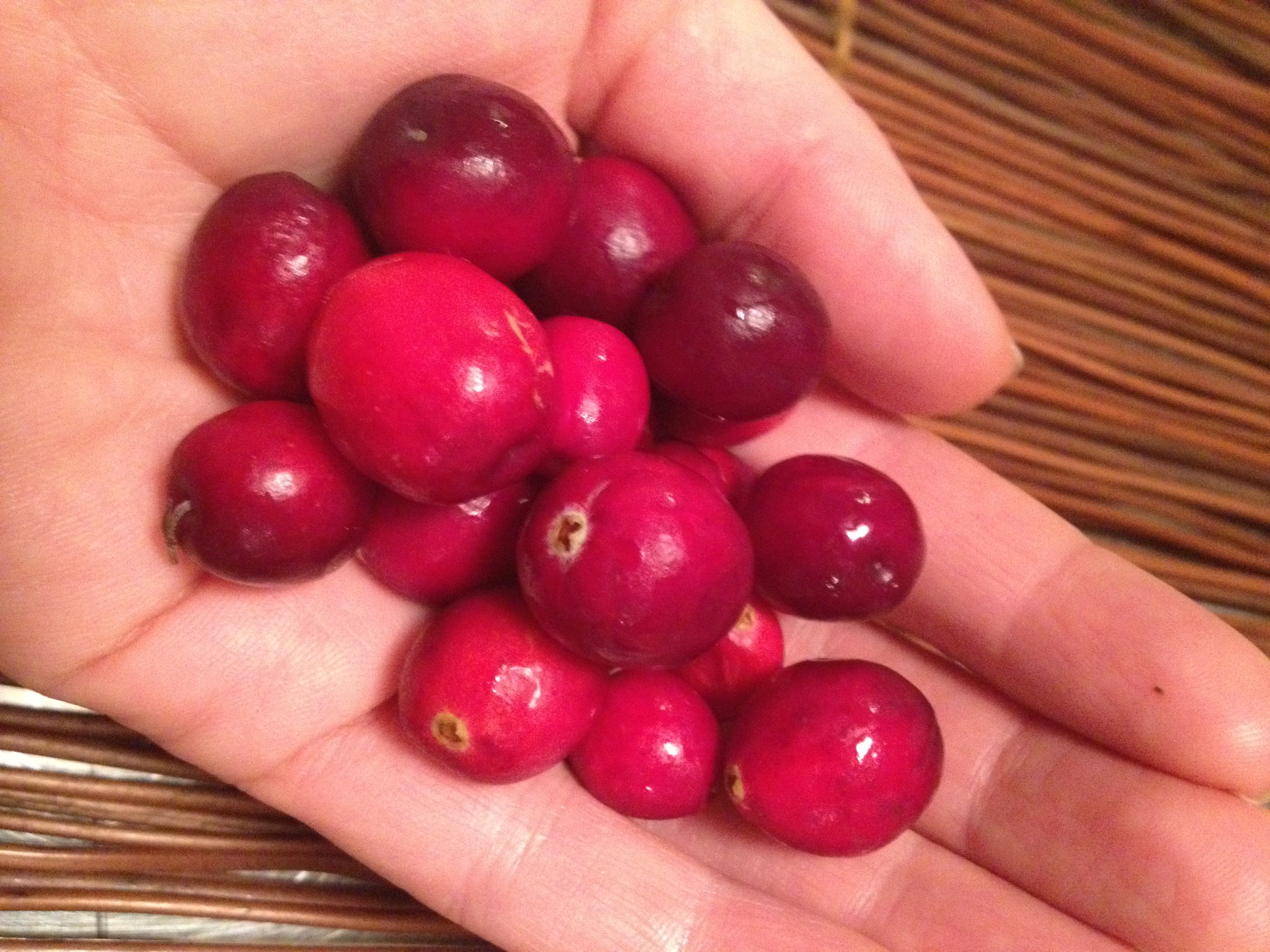 Fresh Organic Cranberries. I love the crimson hue they posses.