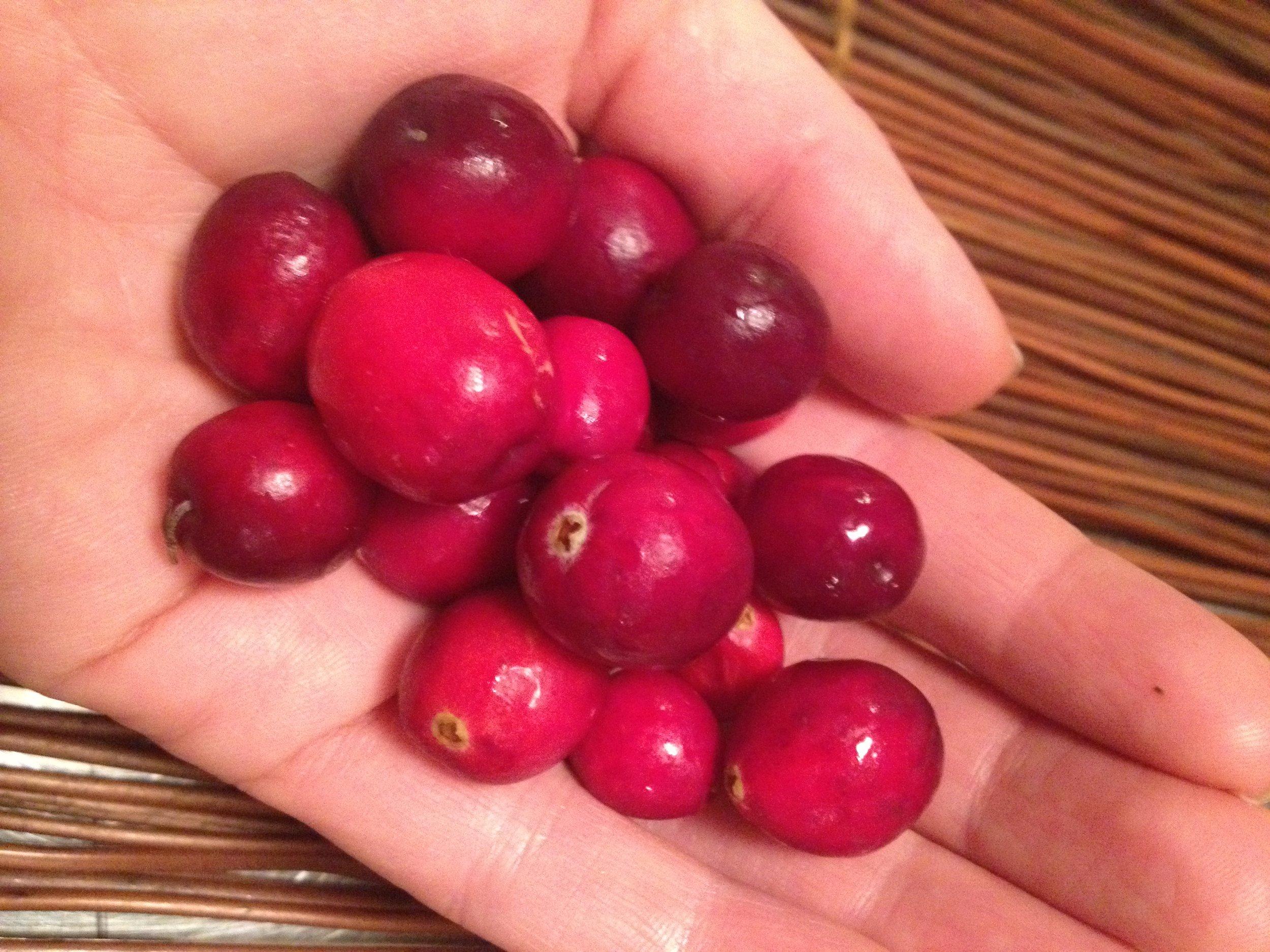 Fresh Organic Cranberries. I love the crimson hue they posses.