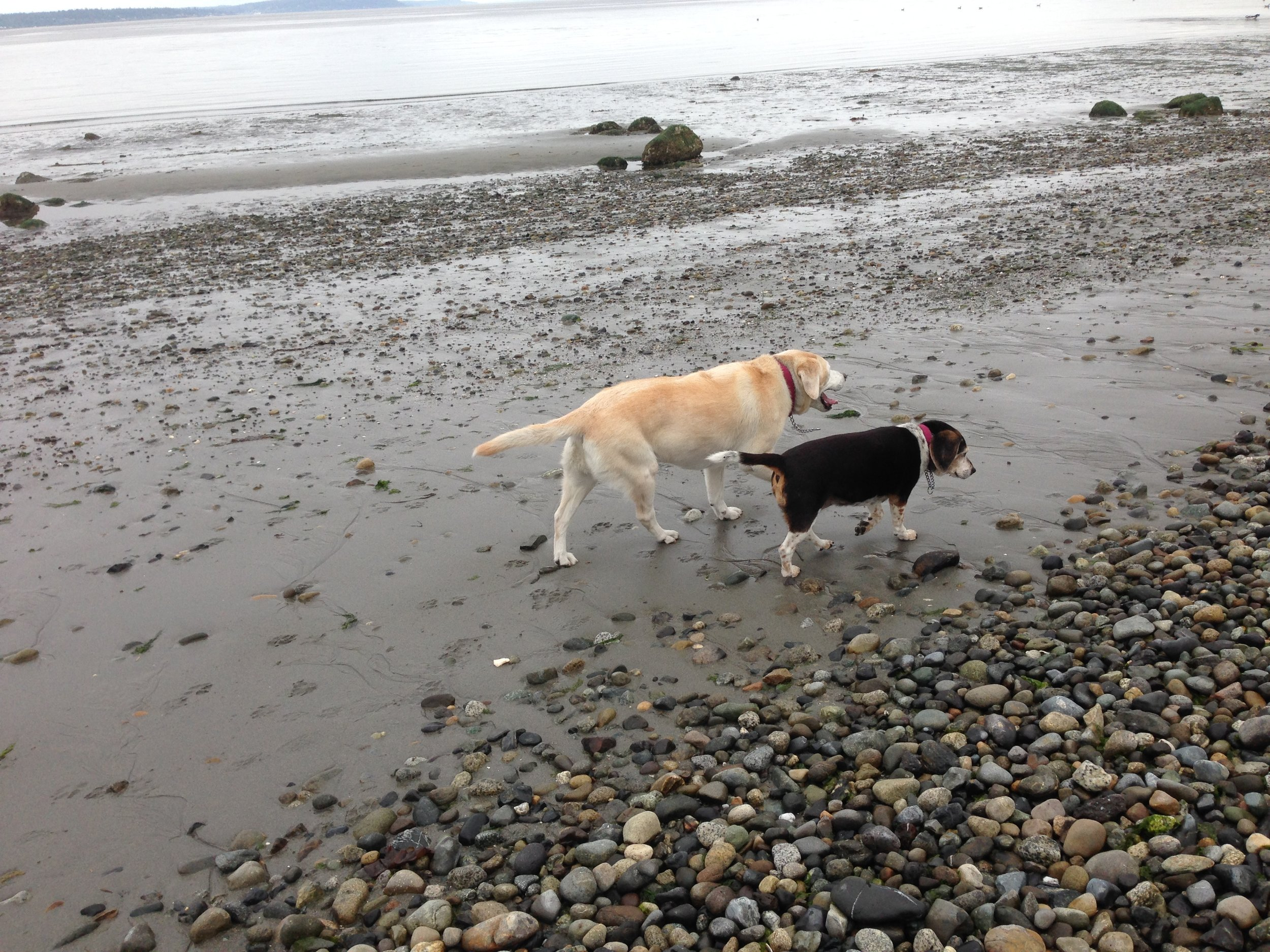 Martini and Latte Walking along the beach.