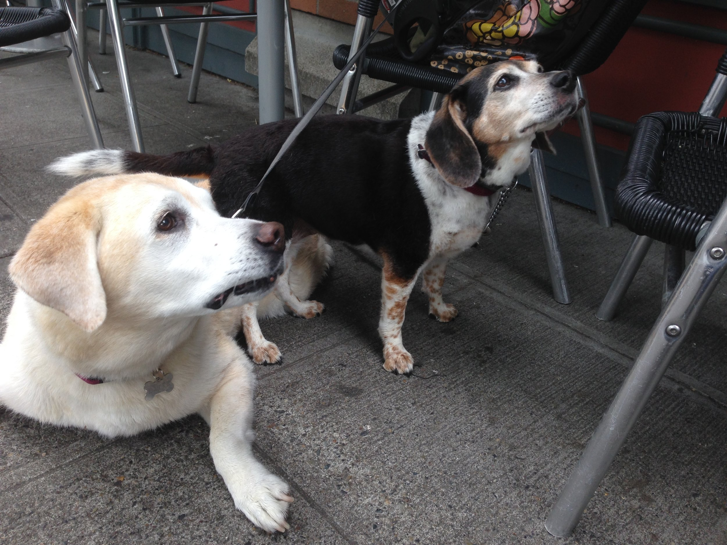 Martini and her sister Latte on one of our daily outings. (May 2015)